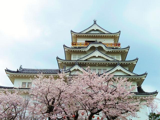 福山城と満開の桜